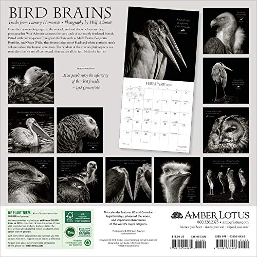 Bird Brains 2019 Wall Calendar: Truths from Literary Humorists and Avian  Portrait Photography