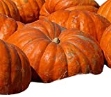 buy Atlantic Giant Pumpkin Seeds - These Are the Record Breaking Pumpkins! now, new 2020-2019 bestseller, review and Photo, best price $10.99