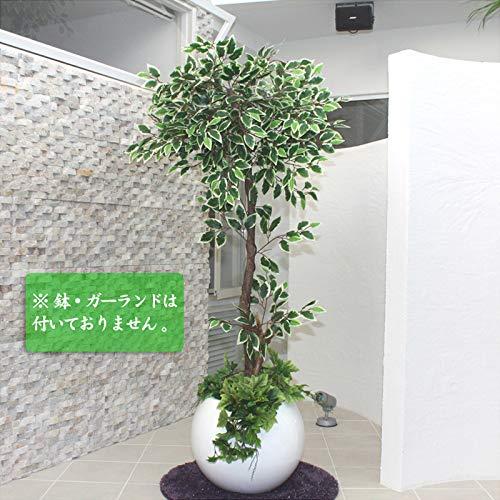 Funderful 人工観葉植物 光触媒 ホワイトフィカス 175cm B00TROBQ80