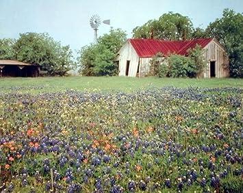 Amazoncom Old Barn Flowers Field Scenery Landscape Wall Decor