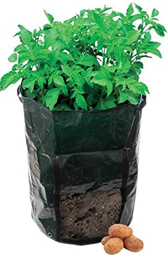 How To Grow Sweet Potatoes In A Bag - 1