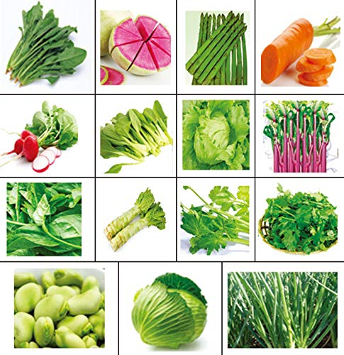 Golden autumn farm-New Season Organic Vegetable Seeds Set of 15 (Asian Seed Lettuce)
