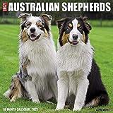 Just Australian Shepherds 2021 Wall Calendar (Dog Breed Calendar)