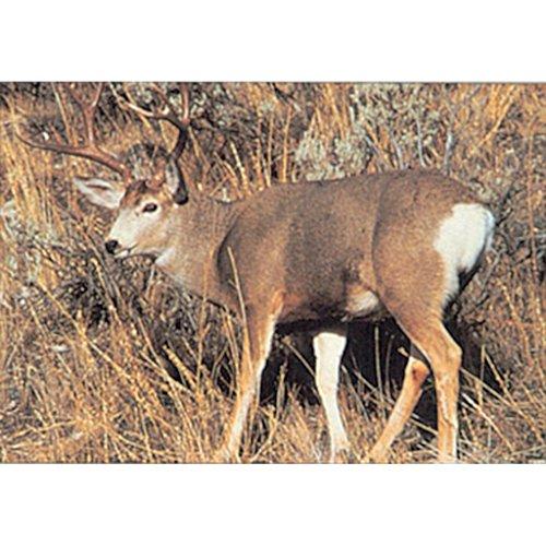 Tru-Life Paper Targets - Mule Deer Sneak (Delta Target Deer)