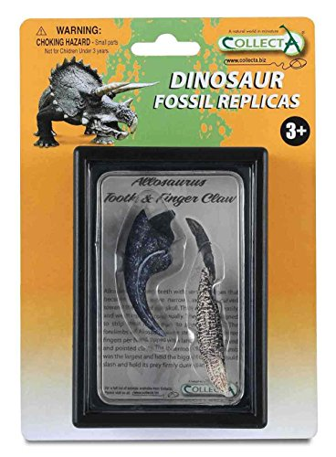 Collecta Prehistoric Life Tooth & Finger Claw of Allosaurus in Display Case - Paleontologist Approved Dinosaur Fossil Replica
