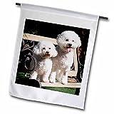 3dRose fl_88774_2″ Two Bishon Frise Dog – Us05 Zmu0060 – Zandria Muench Beraldo Garden Flag, 18 x 27 For Sale
