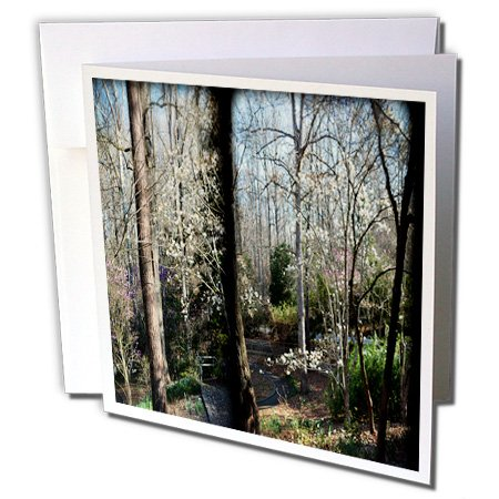 3dRose WhiteOaks Photography and Artwork - Nature Scene - Panel of Flowering Tree are a couple different photo combined together - 1 Greeting Card with envelope ()