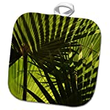 3dRose Danita Delimont - Patterns - California. Light and shadows of Mexican Fan Palm. - 8x8 Potholder (phl_278606_1)