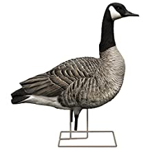 Avian-X Painted Honker Sentry Canada Goose Decoys by Avian-X