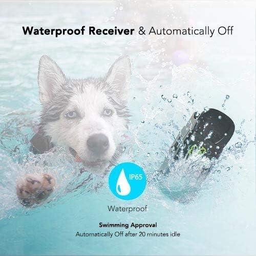 Dog-care-receiver