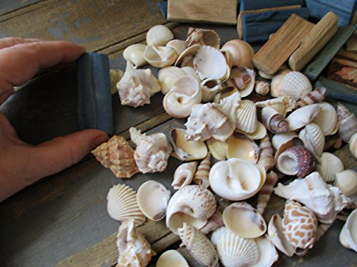 From The Attic Crafts Sea Shells and Wood Bowl Filler Set Beach Decor in Auqa, Seagrass Green and Natural by From The Attic Crafts (Image #6)