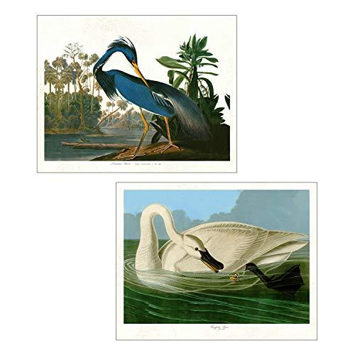 Set of 2 Vintage Audubon Bird Prints - Louisiana Heron and Trumpeter Swan - Unframed 8x10 Prints from Birds of America (Set of 2) ()