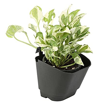 Perfect Cappl Vertical Garden Wall Hanging Pot (Pack Of 12,Black)