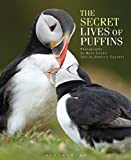 img - for The Secret Lives of Puffins book / textbook / text book