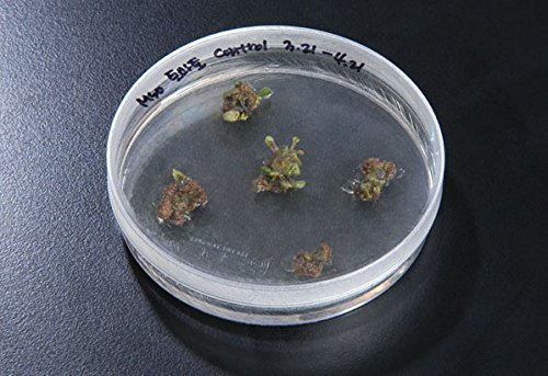 SPL Plant Culture Dish for sprout culture, PS, 100x40mm, Sterile, Case of 200