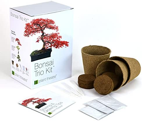 Plant Theatre Bonsai Trio Kit Ensemble de 3 bonsaïs à Faire Pousser