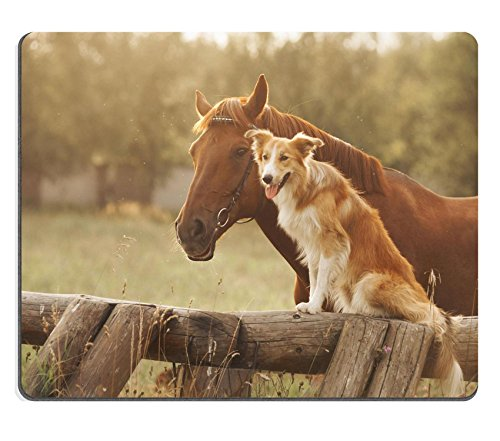 Liili Mouse Pad Natural Rubber Mousepad Red Border Collie Dog and Horse Together at Sunset in Summer Photo 19354445