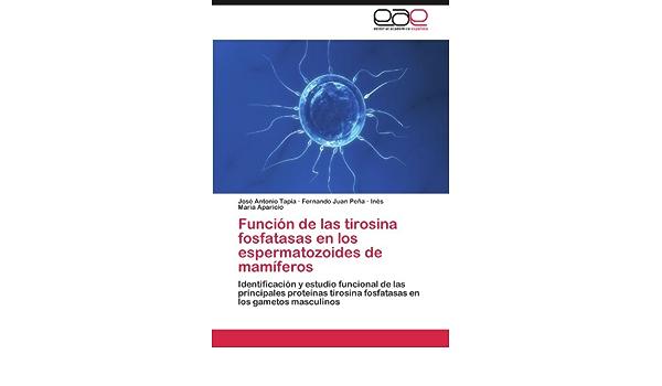 Funcion de Las Tirosina Fosfatasas En Los Espermatozoides de ...
