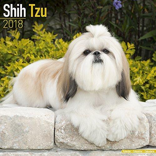 Shih Tzu Calendar 2018 - Dog Breed Calendar - Premium Wall Calendar 2017-2018