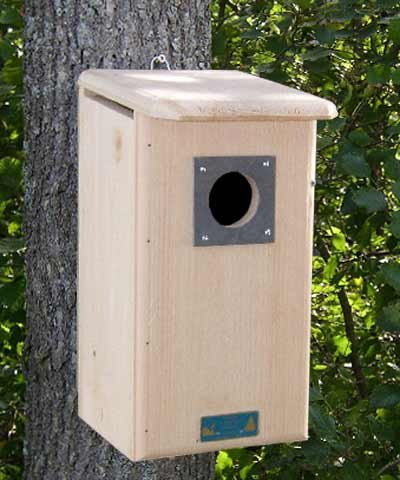 Coveside Northern Flicker House ()