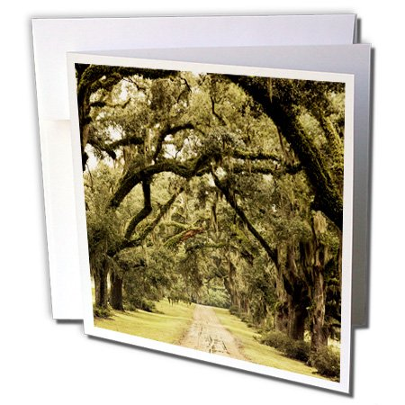 3dRose Louisiana, Oak trees, former plantation - US19 WBI0332 - Walter Bibikow - Greeting Cards, 6 x 6 inches, set of 12 (gc_90514_2)
