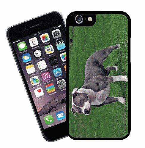 Staffordshire Bull Terrier étui pour téléphone portable, design 4–Housse pour Apple iPhone 6–by Eclipse idées cadeau