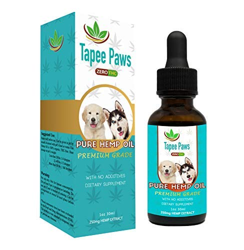 Best nausea meds for dogs to buy in 2019   Allape Reviews