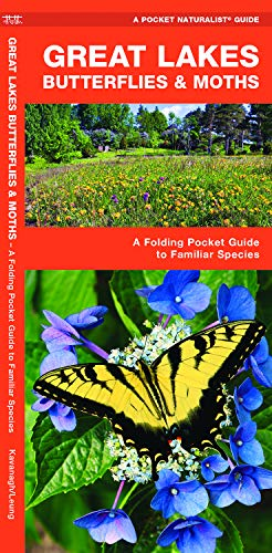 Great Lakes Butterflies & Moths: A Folding Pocket Guide to