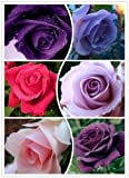 100 Seeds 25 colors rare rainbow rose flower seeds lover Multi-color Plants Home Garden