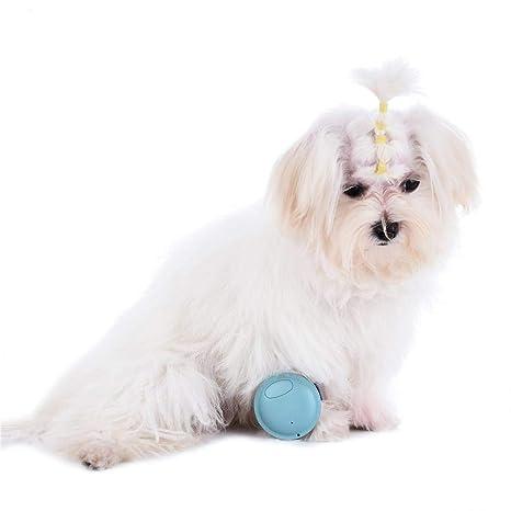 cuckoo-X - Monitor de localización GPS para Mascotas, Monitor de Actividad, Collar
