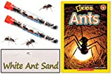 New Ant Farms
