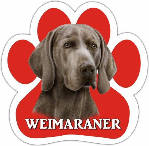 Weimeraner Car Magnet With Unique Paw Shaped Design Measures 5.2 by 5.2 Inches Covered In UV Gloss For Weather Protection