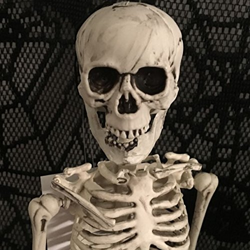 Skeleton Decor (Halloween 20 Inch Hanging Skeleton Realistic Jointed Party Decoration)