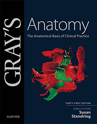 Download Gray's Anatomy: The Anatomical Basis of Clinical Practice Pdf