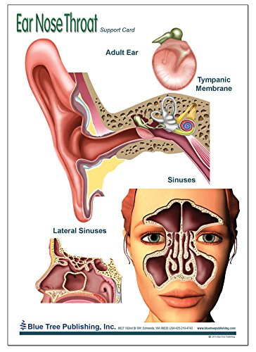Amazon Ear Nose And Throat Support Card Industrial Scientific
