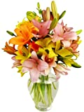 Benchmark Bouquets 12 Stem Assorted Asiatic Lilies, With Vase