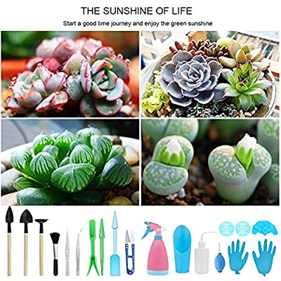 Takefuns 23 Pcs Miniature Garden Planting Transplanting Tool, Mini Garden Hand Succulent Tools, Bonsai Tools, Bud Leaf Trimmer Kit for Plant Care : Garden & Outdoor