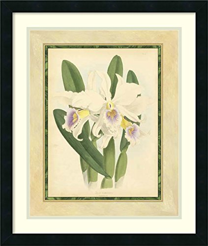 [Framed Art Print 'Fitch Orchid II' by J.N. Fitch] (Fitch Orchid)