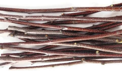 Tin Roof Treasure 6 to 12 Natural Speckled Birch Craft Sticks Pack of 30