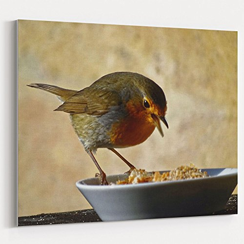 Westlake Art - Robin Bird - 16x20 Canvas Print Wall Art - Canvas Stretched Gallery Wrap Modern Picture Photography Artwork - Ready to Hang 16x20 Inch ()
