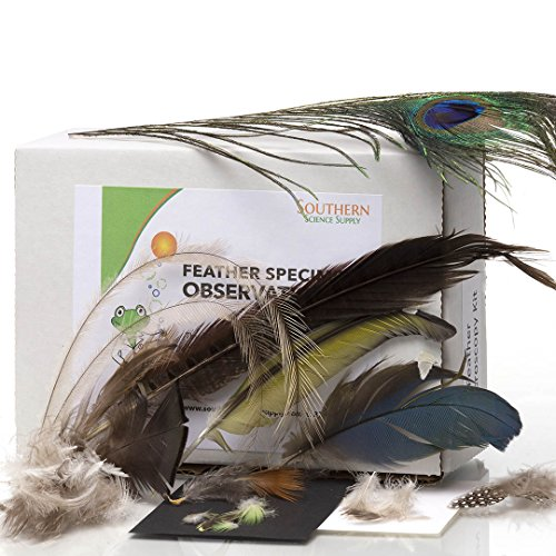 Southern Science Supply Feather Specimen Observation Kit by Southern Science Supply