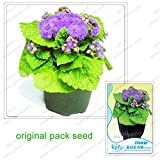 60 Seeds / Pack, Blue Crown Ageratum Conyzoides Seeds, Balcony Potted Flowers Plant Seeds Ageratum Conyzoides