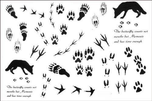 2012 latest new design hot selling Men and women waterproof tattoo sticker wolf paw print fake tattoo by Yimei