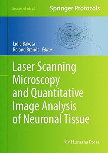 scopy and Quantitative Image Analysis of Neuronal Tissue (Neuromethods) ()