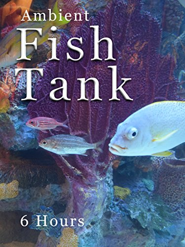 ambient-fish-tank-6-hours
