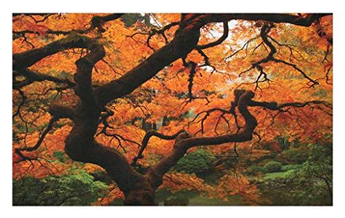oormat, Japanese Maple Trees Deep Dark in The Forest Quite Meditative Environment Photo, Decorative Polyester Floor Mat with Non-Skid Backing, 30 W X 18 L Inches, Orange Brown ()