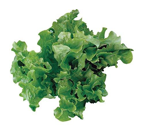 Burpee Lettuce Seed (Burpee Green Salad Bowl Organic Lettuce Seeds 1100 seeds)