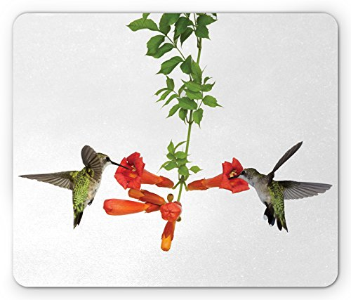 Hummingbirds Mouse Pad by Ambesonne, Two Hummingbirds Sipping Nectar from a Trumpet Vine Blossoms Summertime, Standard Size Rectangle Non-Slip Rubber Mousepad, Red Black (Sipping Nectar)