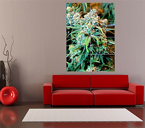 Cannabis Marijuana Weed Plant Giant Art Print Home Decor New Poster