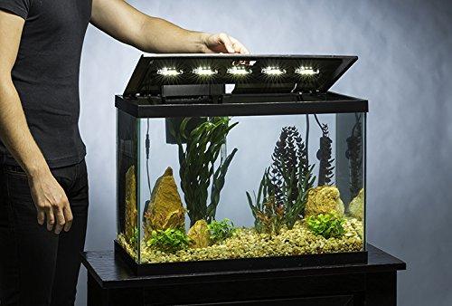 amazon com tetra aquarium 20 gallon fish tank kit includes led